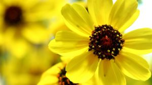 Yellow Flowers by 1ASP1
