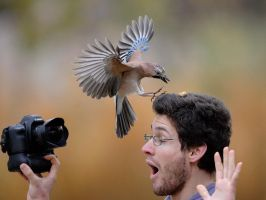 Being a stupid photographer : what is it ? :D by phalalcrocorax