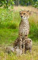 KT and Cubs 271-11A by mym8rick