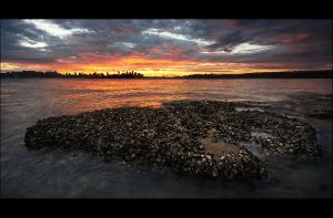 Sydney Sunset IX by psyfre