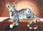 Savannah funny Cat by KingZoidLord