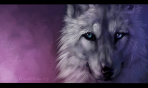 White Wolf by Vao-Ra