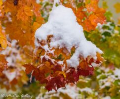 East Shore snow141101-4 by MartinGollery