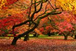 Shapes of Autumn by parallel-pam
