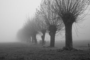 Knotted Willows in Misty Land by steppeland