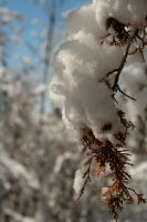 Nicely Frosted by greenwalled1