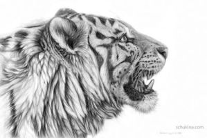 White tiger profile by sschukina