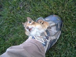 Chippy on my foot by Ripplin