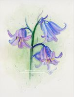 Bluebells by Jeanne-Lui