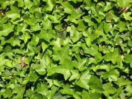 leaves stock woo woo 35235 by epiphany-stock