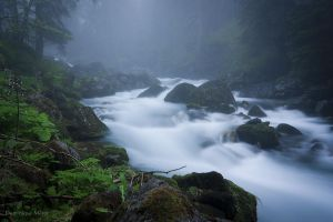 Misty morning by dominique-merot