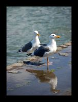 Two and a Half Seagulls by Aldalambe