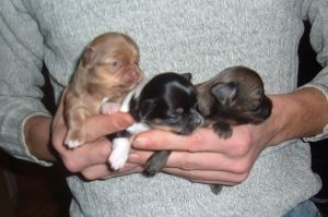 3 puppies by mceric