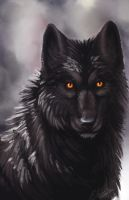 Black Wolf by Annasko