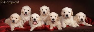 Seven pieces of happiness by DeingeL-Dog-Stock