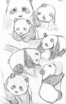 Panda Sketches by warriormaid15
