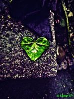 Heart of Leaf by Scorpion31