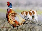 Pheasant Painting 2016 Upland Winner  by robybaer