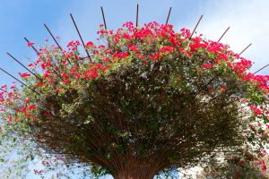 Rebar Trees at the Getty by trevor-w
