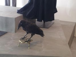 Stuffed Raven at a local by Roses-and-Feathers