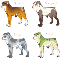 Dog adopts closed by eco226