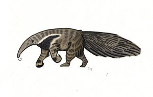 Anteater by yeyra