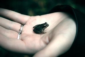 LittleCuteFrog by ONE-Photographie