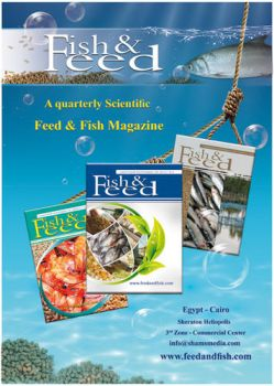 feed and fish magazine advertisement by bakbakgirl