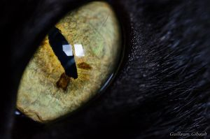 Into the eye of the cat by GuillaumGibault