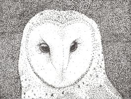 Stippling Owl by Colorpaletpony