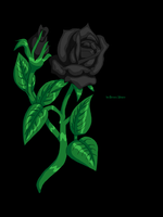 Black Rose... by th3ama