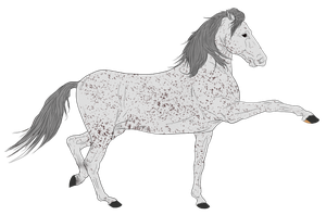 Andalusian Auction Horse 12 by HoofHaven