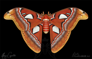 Atlas Moth by MaryCapaldi