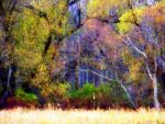 Shades of Autumn 5 by MadGardens