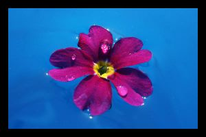 Flower Water drops by C-Natalie