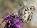 Butterfly 11 - brown butterfly on flower by Momotte2stocks