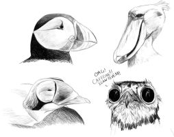 Funny Looking Birds by rob-powell