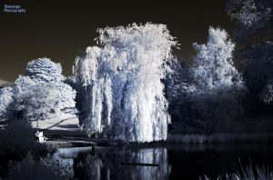 IR Sunset - Willow and Water by Okavanga