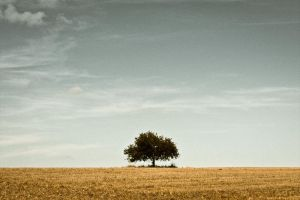 Solitary tree by Mizugashi
