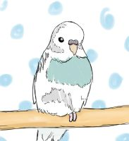 Budgie by gromit99squi