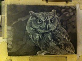 Owl wip by sparrowsong83