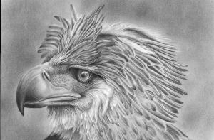 The Philipinne  Eagle by Laurasshadesofgrey