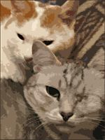 My cats by natoth
