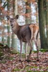 Deer, PF I by FGW-Photography