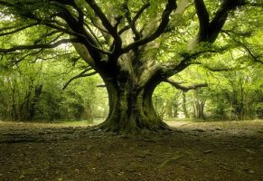 Tree of Life by liamw