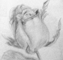 Rose Sketch by accasperberry3