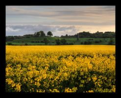 Cammo at Dusk by Chris-Brown