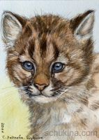 ACEO Cougar Cub Portrait by sschukina