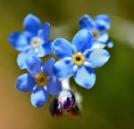 Blue Flowers by Crixans