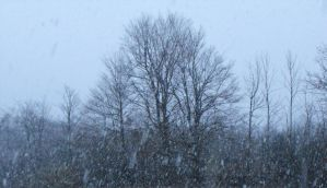 first snowfall of winter 2010 by andyrewr